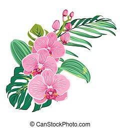 flores, orquídea, ramo, con, tropical, hojas