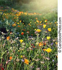 flores, otoñal, jardín