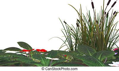 flores, pântano, capim, isolado, cana, &