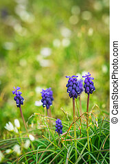 flores púrpuras, en, pasto o césped