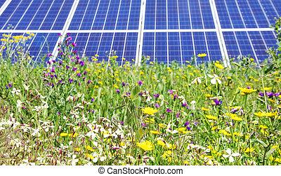 flores, painéis, photovoltaic, selvagem