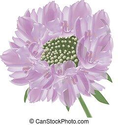 flores, panel, púrpura