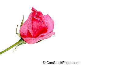 flores, pared, plano de fondo, con, asombroso, rosas, ramo