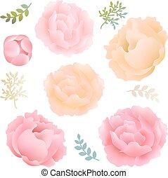 flores, peony