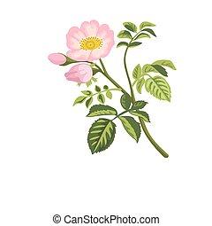 flores, perro, hips., rosa