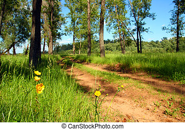 flores, perto, floresta, estrada
