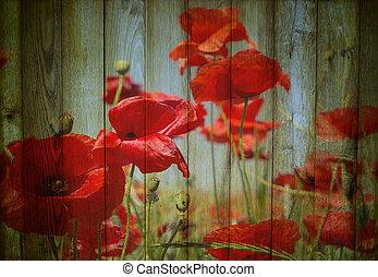 flores, plano de fondo, amapolas