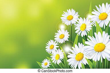 flores, plano de fondo, margarita
