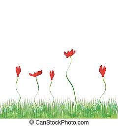 flores, plano de fondo, pasto o césped, rojo