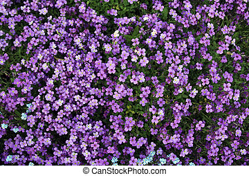 flores, plano de fondo, violeta, diminuto