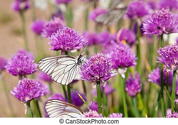 flores, planta, con, mariposas