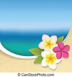 flores, playa, plumeria, plano de fondo, vista