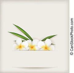 flores, plumeria, plano de fondo