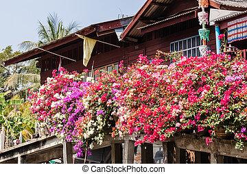 flores potted, tailandés