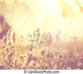 flores, pradera