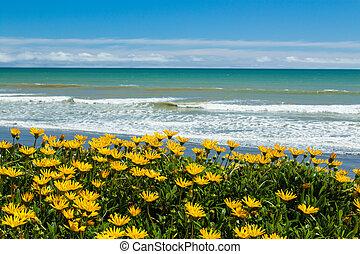 flores, praia