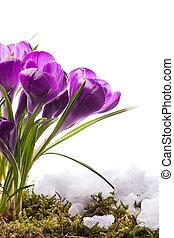 flores, primavera, bonito