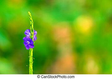 flores, primavera, macio, fundos, foco.