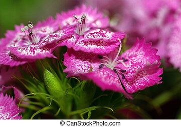 flores, primer plano