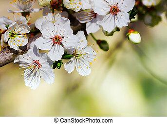 flores, rama, florecer