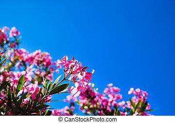 flores rojas, en, cielo