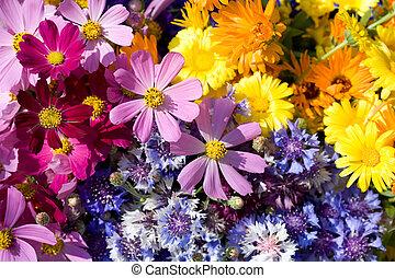 flores salvajes, composition.
