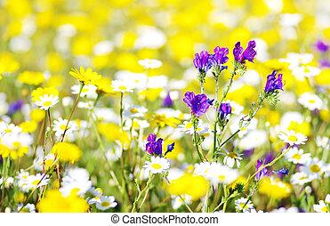 flores salvajes, en, el, campo