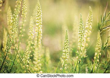 flores salvajes, en, el, sol