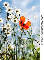 flores salvajes, en, naturaleza