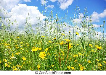 flores salvajes, en, trigo, field.