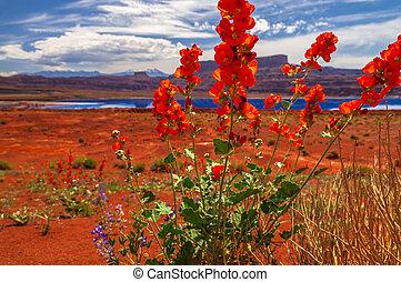 flores selvagens, perto, evaporação, lagoas, -, potash,...