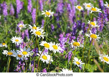 flores selvagens, prado