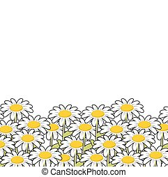 flores selvagens, verão, meadow., paisagem, chamomile., flowers., bonito, branca
