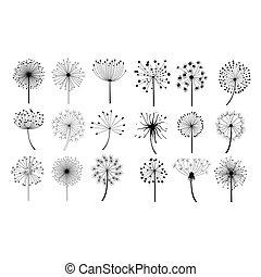 flores, semillas, conjunto, diente de león, velloso