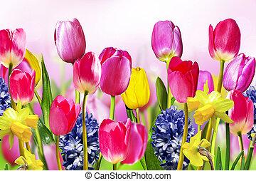 flores, tulipanes, narcisos, y, jacintos
