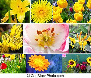 flores, variedade