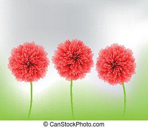 flores, vermelho, natureza