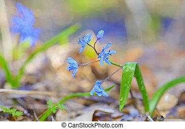 flores violetas, en, bosque
