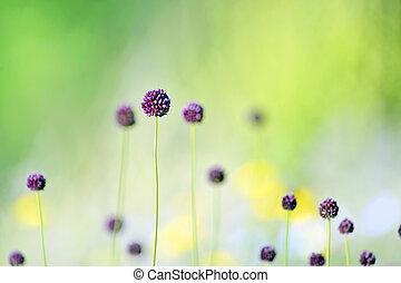 flores violetas, en, campo
