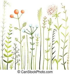 flores, y, pasto o césped, blanco, prado, colección