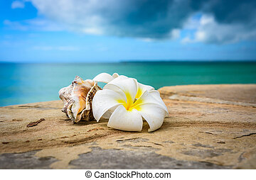 flores, zanzibar