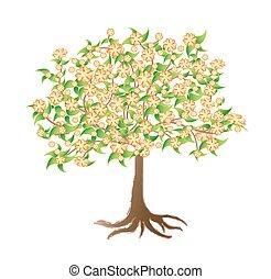 florescendo, árvore abricó