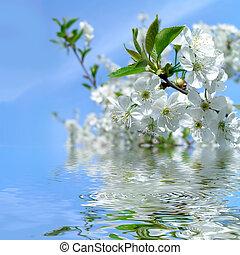 florescer, árvore cereja, azul, céu, com, refletion, em, água