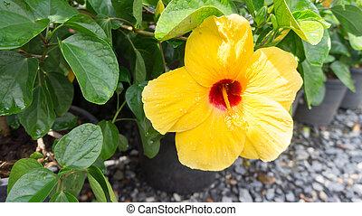 florescer, flor amarela