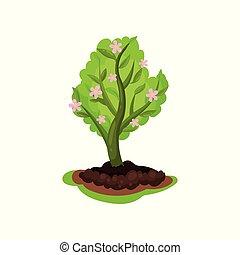florescer, macieira, com, luminoso, verde sai, e, pequeno, cor-de-rosa, flowers., jardinagem, theme., apartamento, vetorial, para, infographic, cartaz, aproximadamente, planta, cultivo