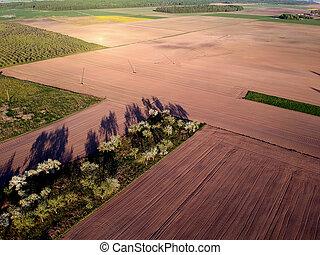 florescer, macieira, jardim, e, cultivado, campos, aéreo