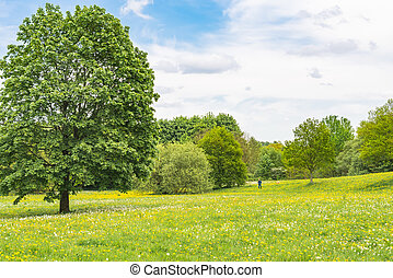 florescer, prado verde, springtime, dandelion