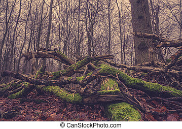 floresta árvore, musgo