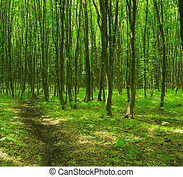 floresta, árvores.