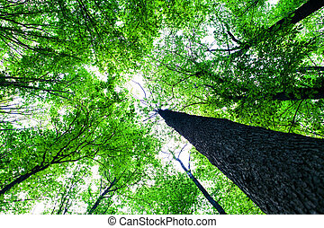 floresta, árvores